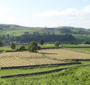 Hay Meadows over Ribblesdale